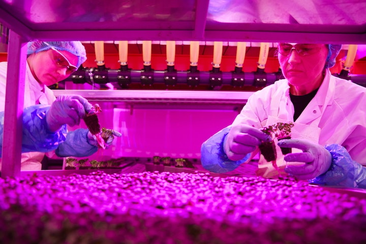 Vertical farming, Colruyt Group